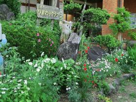 三方オープンガーデンを彩ったいろいろな花・庭2